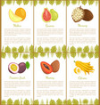 melon and guava marang and passion fruit mamey vector image vector image