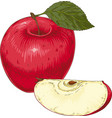 ripe red apple and slice vector image vector image