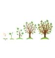 Apple tree growth vector image
