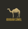 arabian camel engraved hand drawn in old sketch vector image