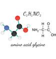 C2H5NO2 glycine amino acid molecule vector image vector image