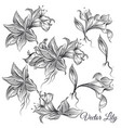 collection of hand drawn lily flowers vector image vector image