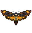 death head hawkmoth vector image vector image