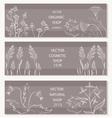 Floral botanical decorative banner vector image vector image