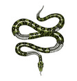 half-skeleton a milk snake in vintage style vector image vector image