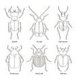 set of beetle vector image vector image