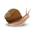 snail mockup realistic style vector image