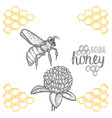 hand drawn bee and clover over white background vector image vector image