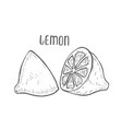 lemon set hand drawn vector image