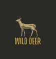wild deer engraved hand drawn in old sketch style vector image vector image