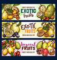 fruits exotic tropical fruit sketch banners vector image vector image