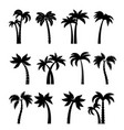 palm trees silhouettes vector image vector image