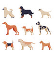 purebred dogs collection beagle dalmatian vector image
