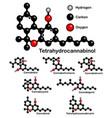 chemical formulas natural cannabinoids vector image