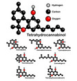 chemical formulas of natural cannabinoids vector image