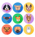 concept of purebred dogs on colored circle icons vector image vector image