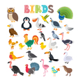 different kind of birds Cute cartoon birds vector image vector image