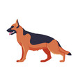 german shepherd purebred dog pet animal side vector image