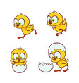 flat cute chick hatching from egg set vector image vector image