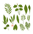 hand drawn abstract set boho leaves with flowers vector image