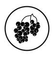 icon of black currant vector image vector image