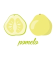 Pomelo fruits poster in cartoon style depicting vector image vector image