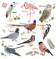 Realistic birds collection vector image vector image