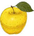 ripe yellow apple vector image vector image