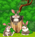 Three rabbits in the woods vector image vector image