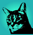 Black abstract cat vector image