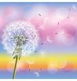 dandelion on background sunset vector image vector image
