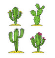 cute desert cactus set with flowers vector image vector image