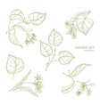Realistic natural drawings of linden leaves and