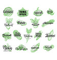 vegetables greenery and salads lettering vector image vector image