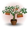 Money plant flower in pot vector image