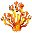 Clown fish swimming around coral reef vector image
