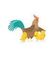 cock with three small yellow chicken isolated on vector image vector image