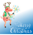 funny pig with sparklers christmas greeting vector image