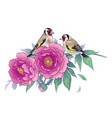 hand drawn goldfinches sitting on pink peony vector image vector image