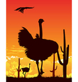 Ostrich wildlife background vector image