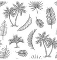 palm tree seamless background tropical coconut vector image
