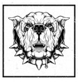 grunge style closeup furious bulldog vector image vector image