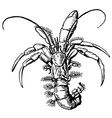 hermit crab vector image vector image