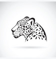 leopard on white background wild animals vector image vector image