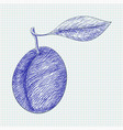 plum hand drawn sketch on lined paper background vector image