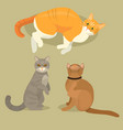 different cat cute kitty pet cartoon cute animal vector image