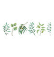eucalyptus plants greenery nature branches and vector image