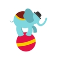 Circus elephant on ball icon vector image