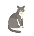 cute pensive grey cat isolated on white background vector image vector image