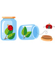 Ladybugs in the bottle and out the bottle vector image vector image
